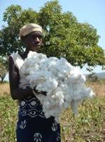 productrice - coton bio - consoGlobe