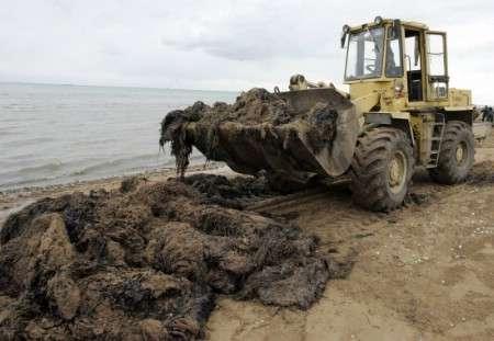 cour pénale contre les délinquants de l'environnement