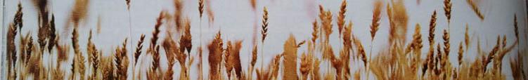 statistiques cereales