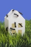 astuces pour se d barrasser des fourmis. Black Bedroom Furniture Sets. Home Design Ideas