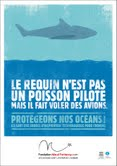 massacres requins