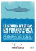 massacres requins