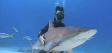 capture requin