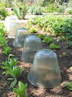Comment prot ger son jardin de l 39 hiver page 2 sur 3 - Cloche en plastique transparent jardin ...