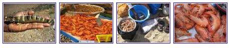 crevettes de madagascar