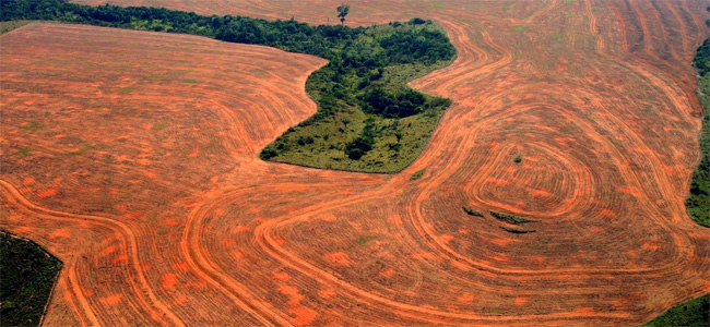 deforestation by Alberto Cesar Araújo, 2004.