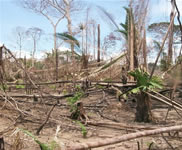 deforestation Developpement durable article