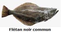 fletan-noir-commun.JPG
