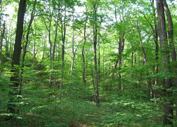 arbres plantés en france