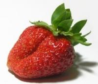 mondialisation fraise andalouse