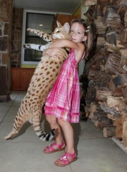 La chatte grande ouverte, il lui introduit sa bite au plus