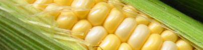 production mondiale OGM