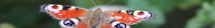 statistiques biodiversite