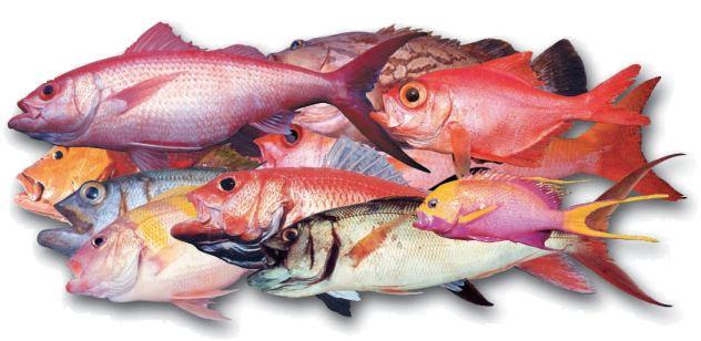 poissons-eaux-profondes-groupe.JPG