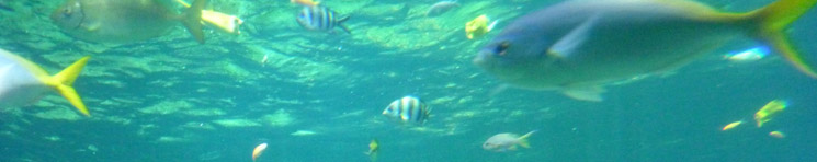 statistiques oceans