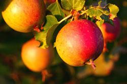 Fruits et légumes les plus pollués