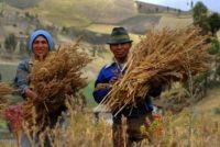 producteurs de quinoa