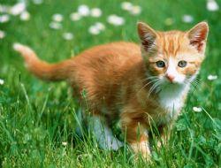 abandon chiens et chats