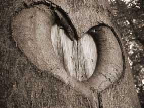 Nature_heart_petit.jpg