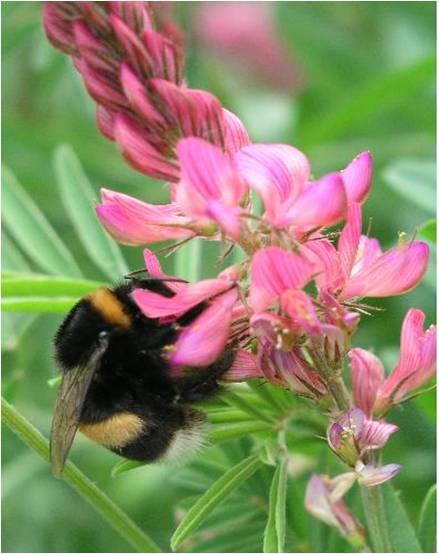 abeille-accrochee.jpg