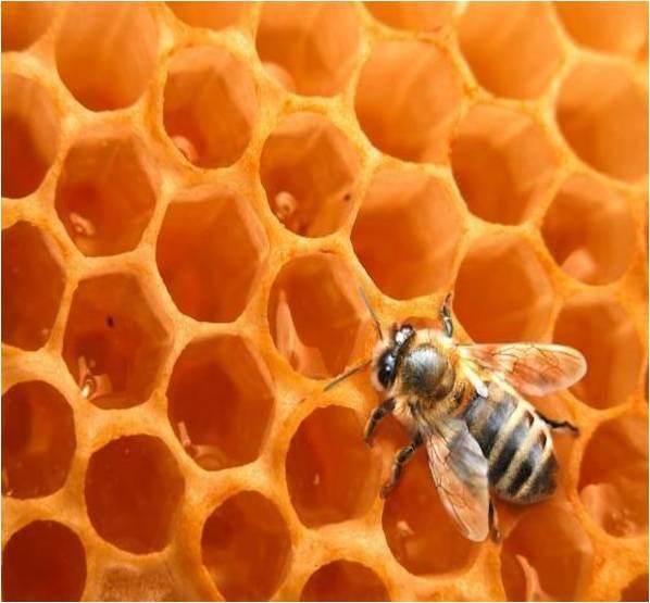 abeille-miel.jpg