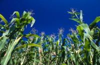 patrimoine agricole en danger