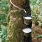 arbrelatex.jpg
