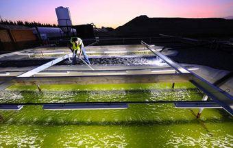 biocarburants-algues.JPG