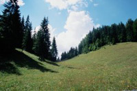 Région des Carpates