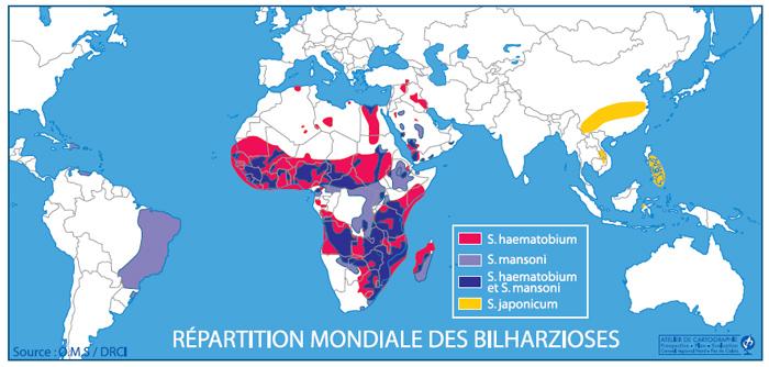 statistiques bilharziose monde