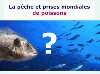 conso mondiale peche poissons