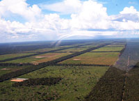 déforestation gran chaco