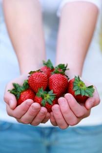 fraises goût