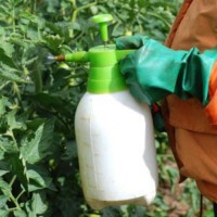 Insecticides prudence