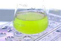 micro algues culture