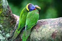sites de rencontres nature amoureux écologie