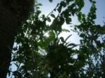 plantes au soleil