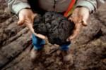 sables bitumeux