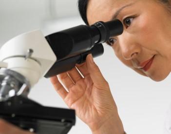 micro algues-recherche
