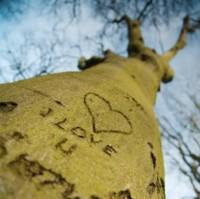 Tree-Nation pour la planète