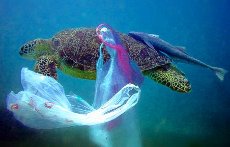 turtle-plastic-bag-under-water-deep-sea-blue-ocean-garbage-trash-ecology-swim-fish-pollution-caught-shell-legs-toes-feet-head-photo.jpg
