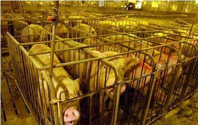 usine a viande